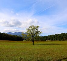 Cade's Cove by doubleblindlabs