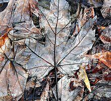 Wet Leaves, Dunrobin Ontario by Debbie Pinard