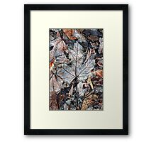 Wet Leaves, Dunrobin Ontario Framed Print