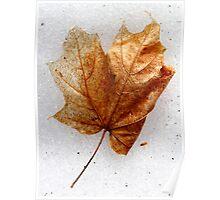 Orange Maple Leaf Poster