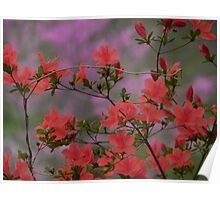 Azaleas Are Busting Poster