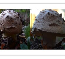 Birth of a Mushroom Sticker
