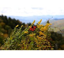 Smoky Butterfly Photographic Print