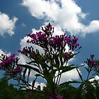 Tall Ironweed Reaching for The Sky by Ron Russell