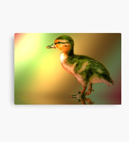 Can Someone Just Love Me Canvas Print