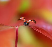 Ladybird in autumn (2015) by Ellen van Deelen