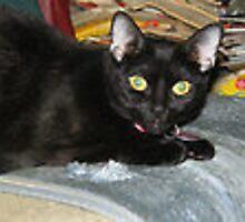 tyna the cat by photofanatic
