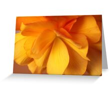 Glowing Begonia Greeting Card