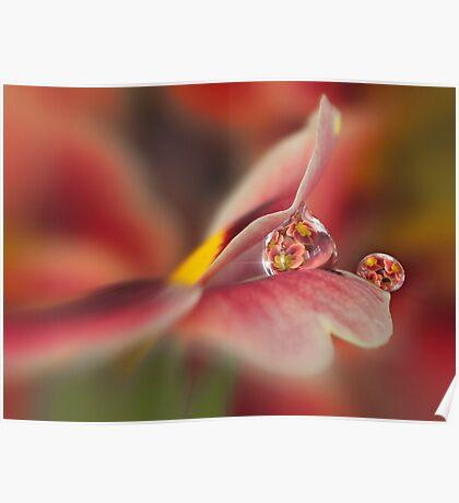 Red primrose refraction Poster