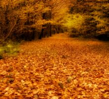 Carpet of Autumn at Stover Country Park, Newton Abbot Sticker
