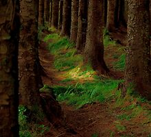 Enchanted Forest by Helen J Cherry
