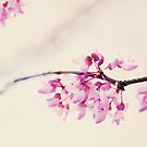 blossoms by beverlylefevre