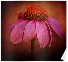 Textured Echinacea Poster