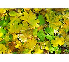 Top view of a bright yellow and green leaves on the lawn Photographic Print