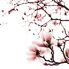 Magnolia - monochrome by Laura Melis