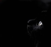 Black beauty by Laura Melis