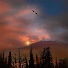 2169 by peter holme III