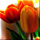 Tiptoe Through the Tulips by Brenda Boisvert