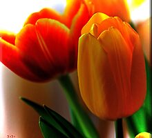 Tiptoe Through the Tulips by Brenda Boisvert