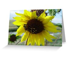 Sunflower and Red-butted Bee Greeting Card