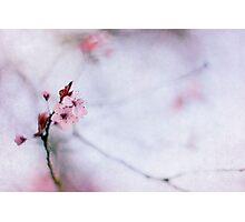 Haiku II Photographic Print