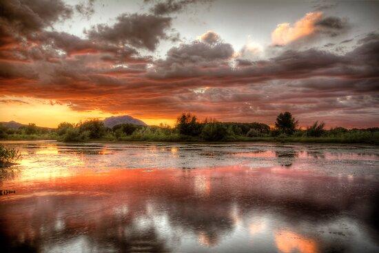 Swamp Glass 2 by Bob Larson