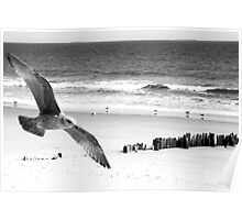Flying By The Beach Poster