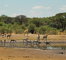 Hwange magic by Explorations Africa Dan MacKenzie