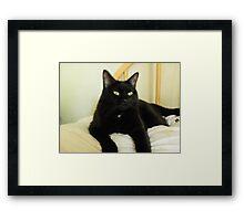 Zoe Black Cat 5 with White Oath Medallion Framed Print