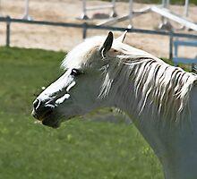 geriatric equine by titianbeta