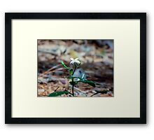 Lonesome Framed Print
