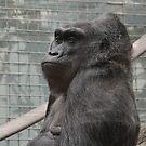 Colo the Gorilla  by mwfoster