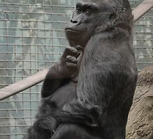 Colo the Gorilla 2 by mwfoster