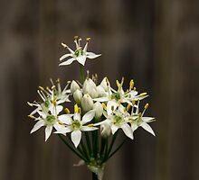 Garlic Chives by nixworries