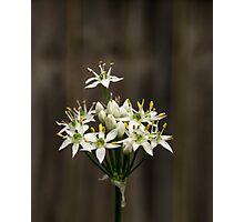 Garlic Chives Photographic Print