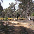 A woodland walk by georgieboy98