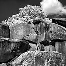 Devil's Den - 39 - Infrared by ©  Paul W. Faust