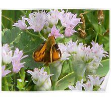 Wind Damage - Moth Poster