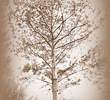 Tones Of Sepia by Wanda Raines