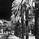 In The Park #1 IR by peterperfect