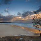 Casuarina Gold - North Stradbroke Island - Qld Australia by Beth  Wode