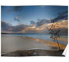 Casuarina Gold - North Stradbroke Island - Qld Australia Poster