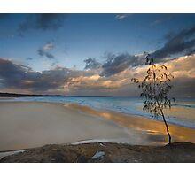 Casuarina Gold - North Stradbroke Island - Qld Australia Photographic Print
