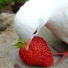 It&#x27;s A Strawberry Affair I&#x27;m Having - White Dove - NZ by AndreaEL