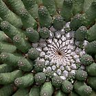 Vingerpol - Euphorbia esculenta by Rina Greeff