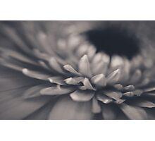 Lensbaby flower Photographic Print