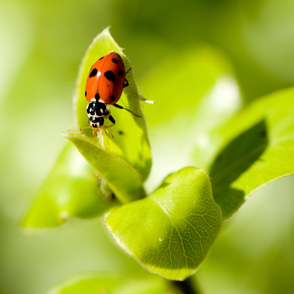 Ladybird Ladybird fly away home.... #1 by Mark Elshout