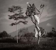 frangipani tree by wellman