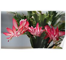 Easter Cactus Poster