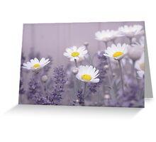 Daisies in Lavendar Greeting Card